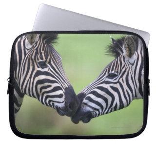 Plains zebra (Equus quagga) pair interacting Computer Sleeve