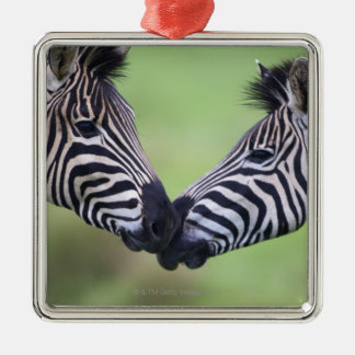 Plains zebra (Equus quagga) pair interacting Metal Ornament