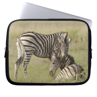 Plains Zebra (Equus quagga) pair resting on Laptop Sleeves