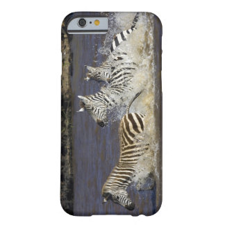 Plains Zebra (Equus quagga) running in water, Barely There iPhone 6 Case