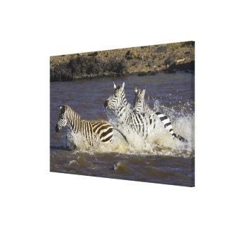 Plains Zebra (Equus quagga) running in water, Canvas Print