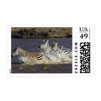Plains Zebra (Equus quagga) running in water, Postage Stamps