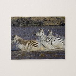 Plains Zebra (Equus quagga) running in water, Jigsaw Puzzle