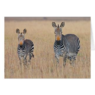 Plains zebra (Equus quagga) with foal Cards