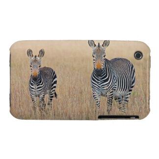 Plains zebra (Equus quagga) with foal Case-Mate iPhone 3 Cases