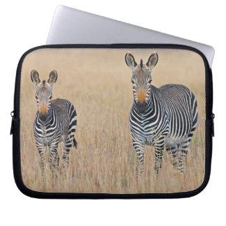 Plains zebra (Equus quagga) with foal in Laptop Sleeve