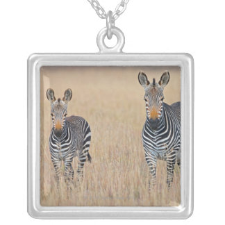 Plains zebra (Equus quagga) with foal Silver Plated Necklace