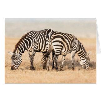 Plains Zebra Or Common Zebra (Equus Quagga) 2 Card