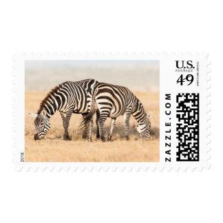 Plains Zebra Or Common Zebra (Equus Quagga) 2 Stamps