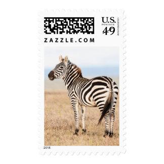 Plains Zebra Or Common Zebra (Equus Quagga) 3 Postage