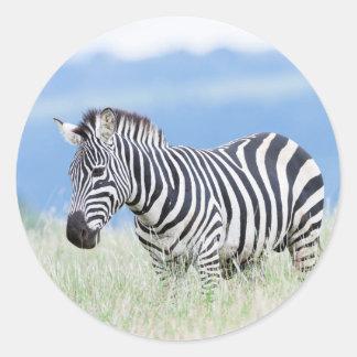 Plains Zebra Or Common Zebra (Equus Quagga) Classic Round Sticker