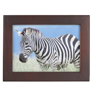 Plains Zebra Or Common Zebra (Equus Quagga) Keepsake Box