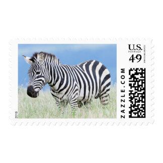 Plains Zebra Or Common Zebra (Equus Quagga) Postage Stamps
