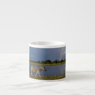 Plains Zebra Walking in Front of a Rainbow Espresso Cup