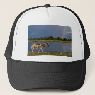 Plains Zebra Walking in Front of a Rainbow Trucker Hat