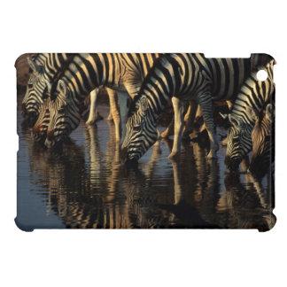 Plains Zebras (Equus Quagga) Herd Drinking iPad Mini Covers