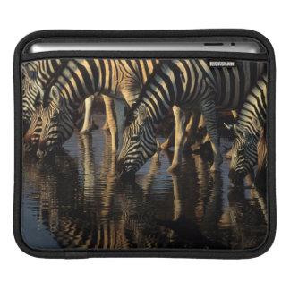 Plains Zebras (Equus Quagga) Herd Drinking iPad Sleeves
