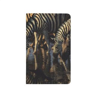 Plains Zebras (Equus Quagga) Herd Drinking Journal
