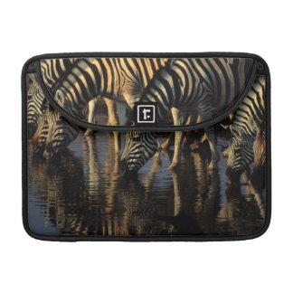 Plains Zebras (Equus Quagga) Herd Drinking Sleeves For MacBook Pro