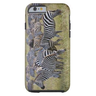 Plains Zebras on migration, Equus quagga, 2 Tough iPhone 6 Case