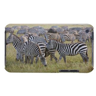 Plains Zebras on migration, Equus quagga, 2 Case-Mate iPod Touch Case