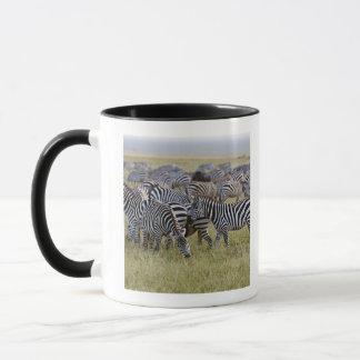 Plains Zebras on migration, Equus quagga, 2 Mug