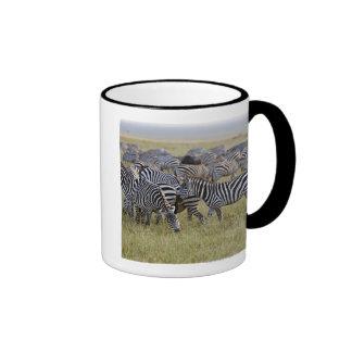 Plains Zebras on migration, Equus quagga, 2 Mugs