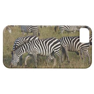 Plains Zebras on migration, Equus quagga, 3 iPhone 5 Case