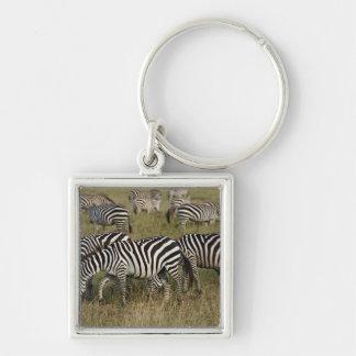 Plains Zebras on migration, Equus quagga, 3 Keychain