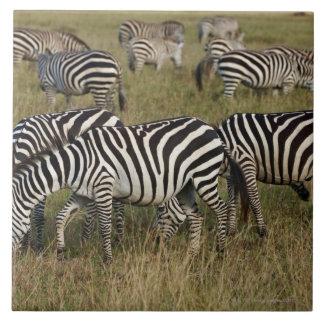 Plains Zebras on migration, Equus quagga, 3 Large Square Tile