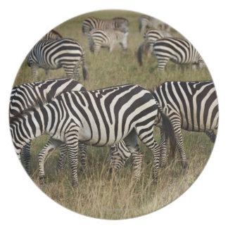 Plains Zebras on migration, Equus quagga, 3 Melamine Plate