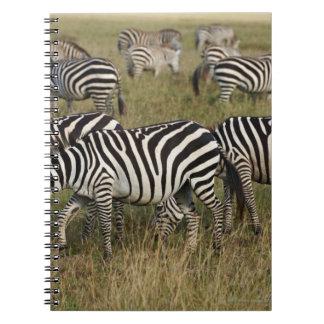 Plains Zebras on migration, Equus quagga, 3 Note Book
