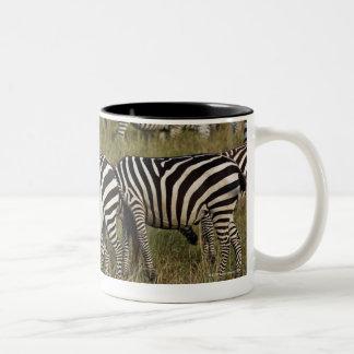 Plains Zebras on migration, Equus quagga, 3 Two-Tone Coffee Mug