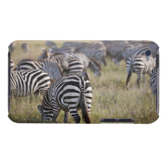 Plains Zebras on migration, Equus quagga, Barely There iPod Cover
