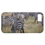 Plains Zebras on migration, Equus quagga, iPhone 5 Case