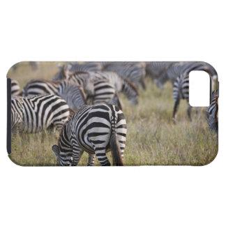 Plains Zebras on migration, Equus quagga, iPhone 5 Cover