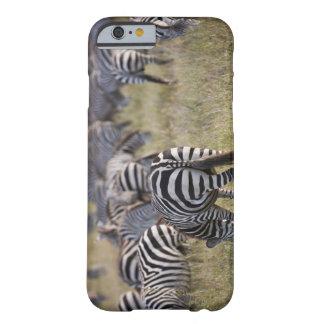Plains Zebras on migration, Equus quagga, Barely There iPhone 6 Case