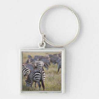 Plains Zebras on migration, Equus quagga, Keychain