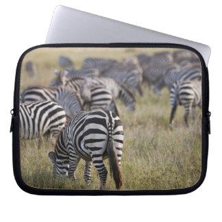 Plains Zebras on migration, Equus quagga, Laptop Sleeves