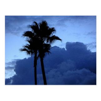 Plam Trees At Sunrise Postcard