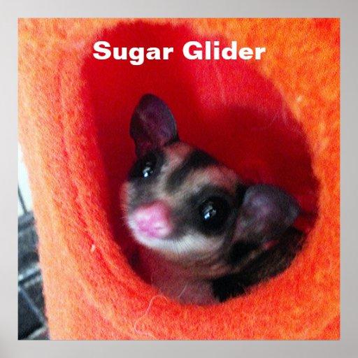 Planeador del azúcar en cama colgante anaranjada poster