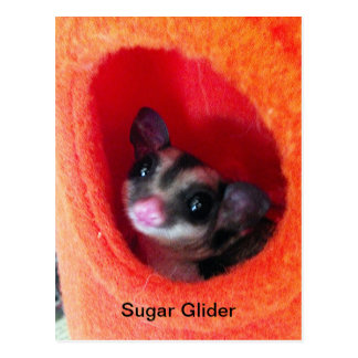 Planeador del azúcar en cama colgante anaranjada postal