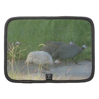 Planificador de las aves de Guinea