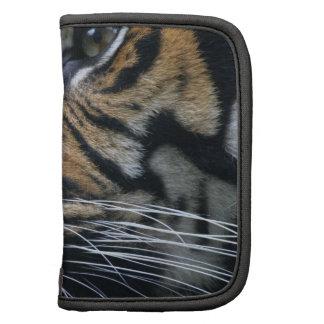 Planificador del día de la imagen del tigre