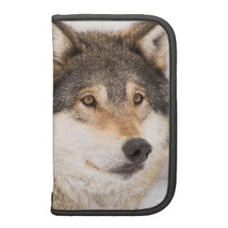 Planificador en folio del lobo
