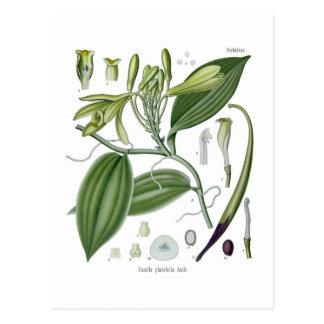 Planifolia de la vainilla postal