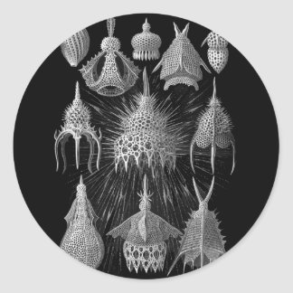 Plankton Shells in Black and White (Cyrtoidea) Classic Round Sticker