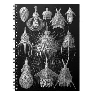 Plankton Shells in Black and White (Cyrtoidea) Notebook