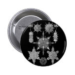 Plankton Skeletons in Black and White 2 Inch Round Button