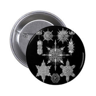 Plankton Skeletons in Black and White Pinback Button